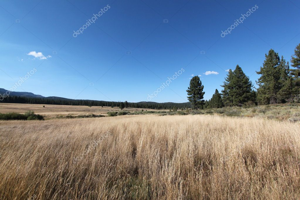 Open meadow with blue sky  Stock Photo #6529763