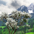 Stock Photo: Alps. Austria. Spring