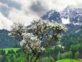 Alps. Austria. Spring — Stock Photo