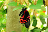 Butterfly on branch — Stock Photo