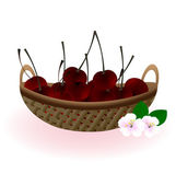 Basket of cherries — Stock Vector