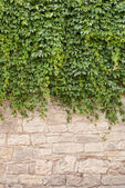 Background of old wall and vinegrapes — Stock Photo