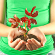 Woman holding seedling grown from soil in her hands — Stock Photo