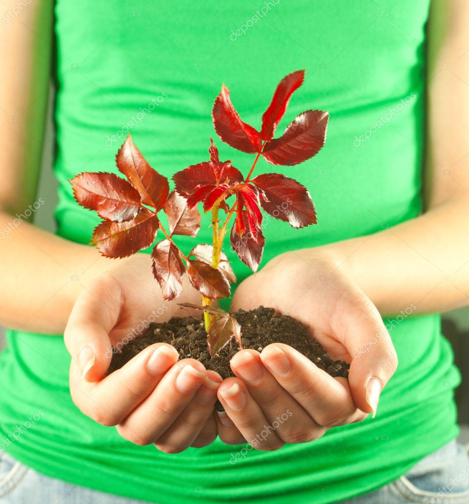 Woman holding seedling grown from soil in her hands  Stock Photo #6708709