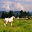 White horse in mountain — Stock Photo #5945914