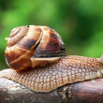Crawling snail — Stock Photo