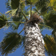 Palm tree — Stock Photo #5402047