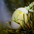 Easter in spring — Stock Photo #5439443