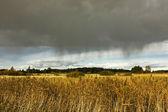 Pioggia nel campo — Foto Stock