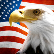 Eagle in the foreground with the American flag blurred - Stock fotografie