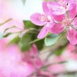 Beautiful Flowers Border. — Stock Photo