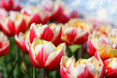 Piękne kwiaty granicy. — Zdjęcie stockowe
