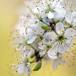 Stock Photo: Macro blossoms