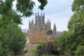 Ely cathedral from trees — Stock Photo