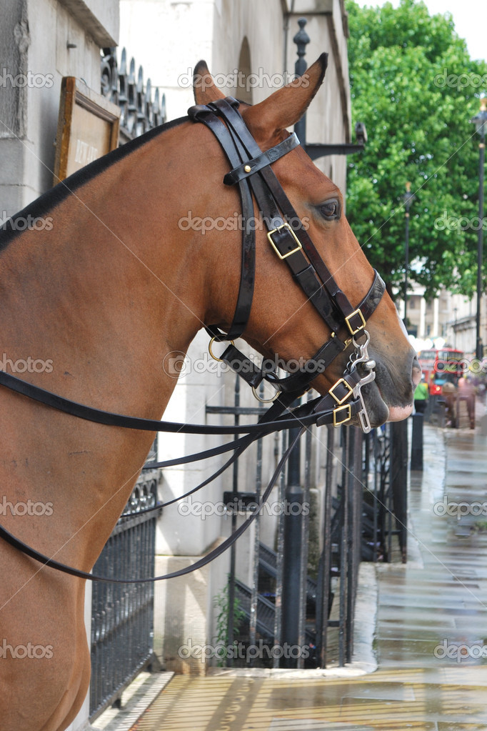 Close up of horse in city  — Stock Photo #6051702