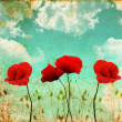 Poppies on a vintage sky - Stock Photo