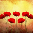 Beautiful poppies — Stock Photo #6541554