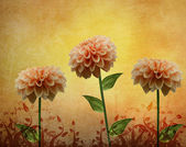 Dahlia flowers composition — Stock Photo