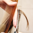 Hair cutting — Stock Photo #5705121