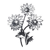Chamomile flowers sketch — Stock Photo