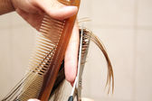 Hair cutting — Stock Photo