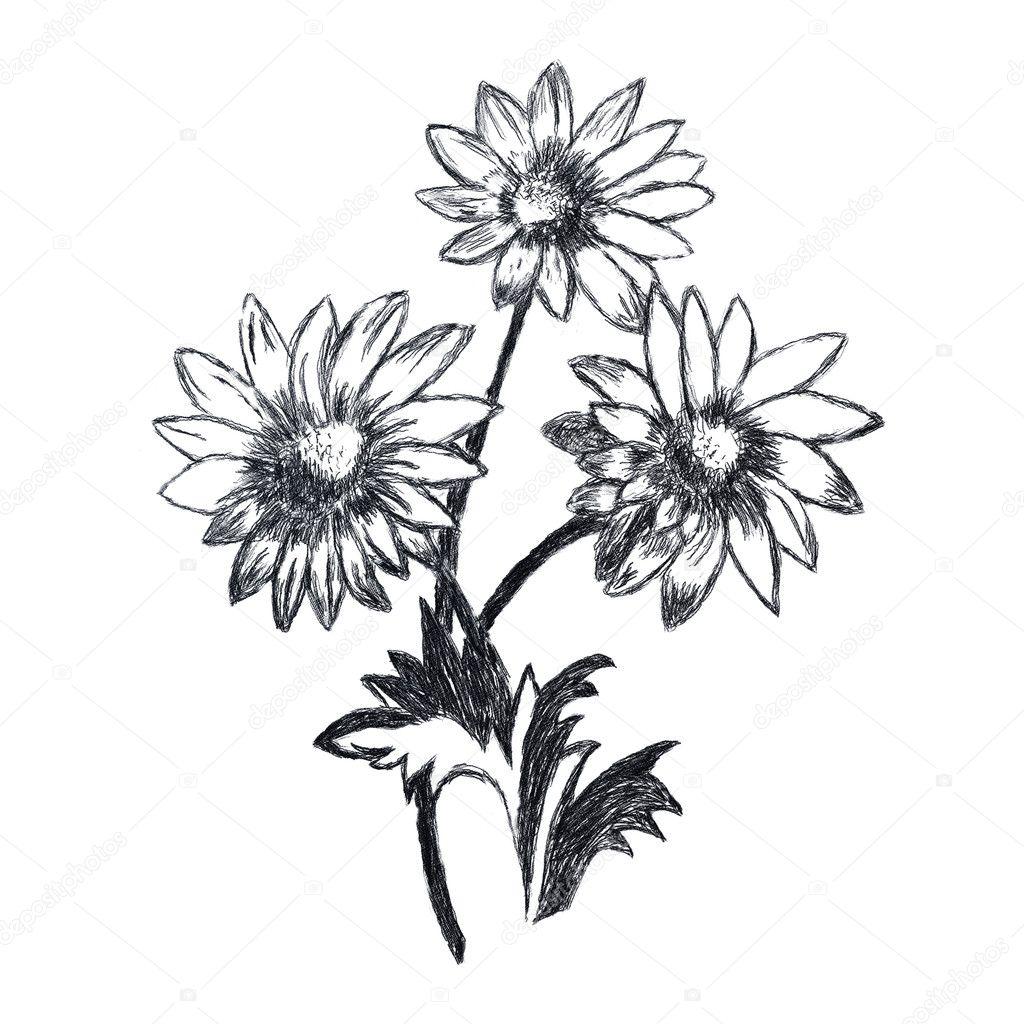 Картинки цветов карандашом 3