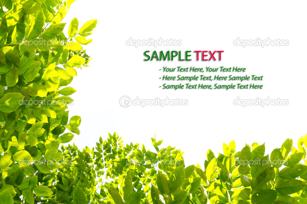 green leaf frame isolated stock photo 5989405