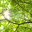 Green leaf and sun for background — Stock Photo #5990644