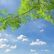 Green leave against blue sky — Stock Photo #6180846