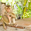 Monkey sit on table — Stock Photo