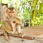 Monkey sit on table — Stock Photo