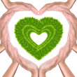 Green grass heart in hands — Stock Photo #6181738