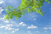 Green leave against blue sky — Stock Photo