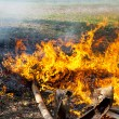 Fire on grass — Stock Photo