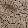 Dry ground texture — Stock Photo