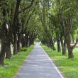 Stock Photo: Small road under tree tunnel