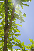 Branch with green tree on blue sky — Stock Photo