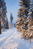 Winter forest in mountains — Stock Photo