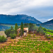 France, view of vineyards — Stockfoto #6079056