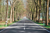 Country road lined with trees — Stock Photo