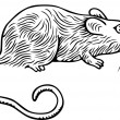 Grey rat — Stock Vector #6194757