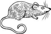 Grey rat — Stock Vector