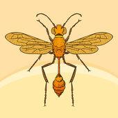 Wasp sphex — Stock Vector