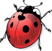 Vector ladybug — Stock Vector