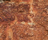 Texture of red coquina — Stock Photo