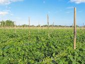 Gemüse-hof — Stockfoto