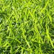 Backlit Grass — Stock Photo #6048450