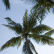 Coconut Trees — Stock Photo #6262714