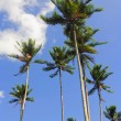 Coconut Trees — Stock Photo #6263140