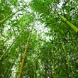 Bamboo — Stock Photo #6263213